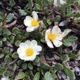 wild flowers of the rockies - Karen Anderson