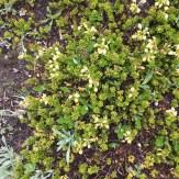 wildflowers - talus lodge - Karen Anderson