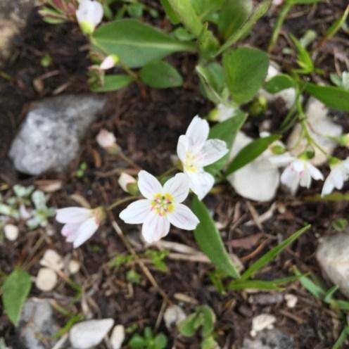 wildflowers - Karen Anderson