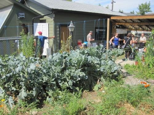 """Rob & Michelle Avis's backyard """"lasagna"""" layered garden"""