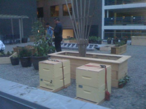 Night time arrival of my bees at Downtown Food Restaurant's rooftop garden