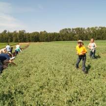 Elna Edgar - outstanding in her field of peas with some guests on one of my farm tours photo - Karen Anderson