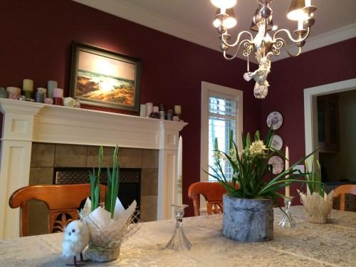 spring bulbs at Christmas give us reason to hope photo - Karen Anderson