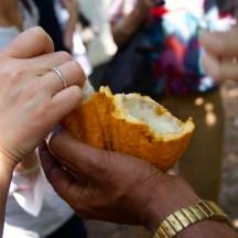 cracking open a cocoa pod - photo - Karen Anderson