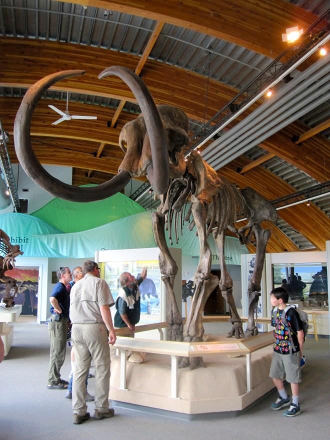 Beringia Museum, Whitehorse, YK
