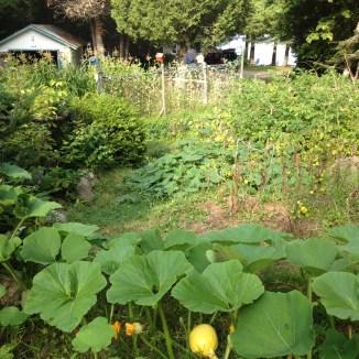 Dad's garden 2012