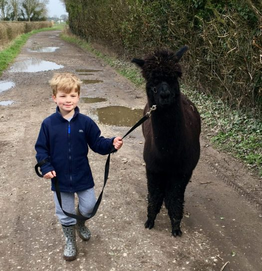 Jack with James the alpaca