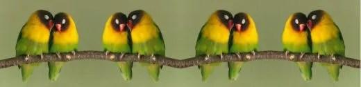 lovebird divider bar
