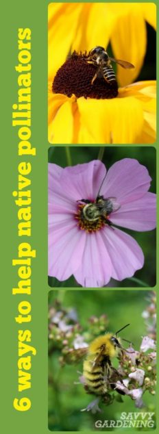 From creating habitat to providing nectar, here are six excellent ways to support native bees.
