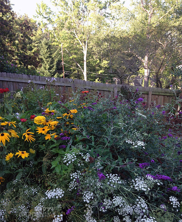 butterfly garden and beneficial insect garden