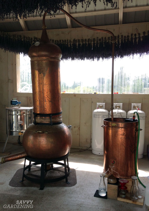 The copper still, where the lavender oil is produced.