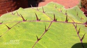 protective spines on leaf