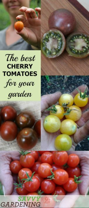 Discover the best cherry tomato varieties for your garden - in every color of the rainbow.