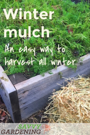 A simple winter mulch of leaves or straw is an easy way to extend the harvest.