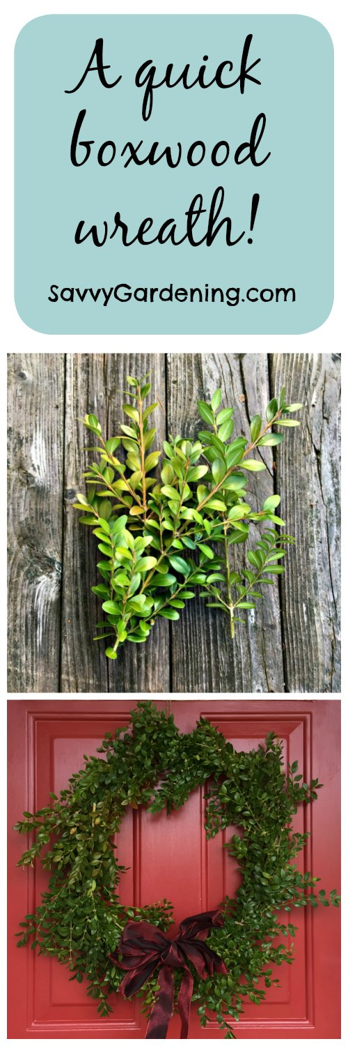 How to make a quick boxwood wreath