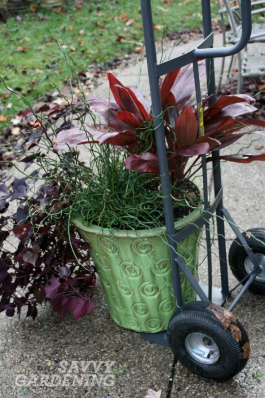 Hand trucks are great gifts for gardeners