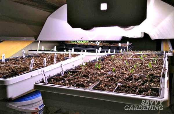 What's the best way to grow seeds - windowsills or with grow lights?