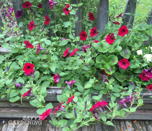 pinching annuals