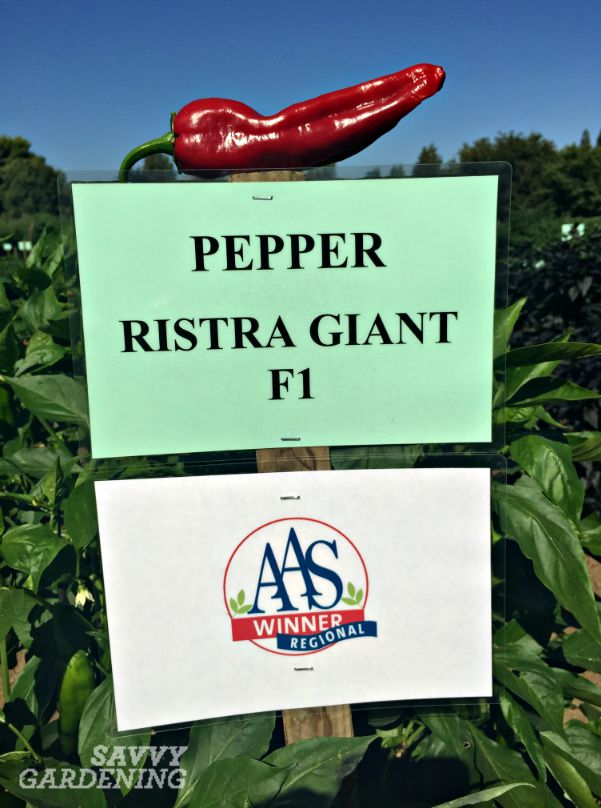 Patty is passionate about peppers and has bred several award-winning hybrids, including Giant Ristra.