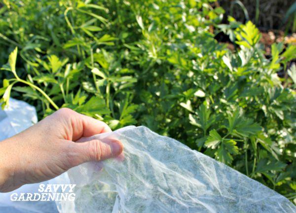 vegetable gardening for fall