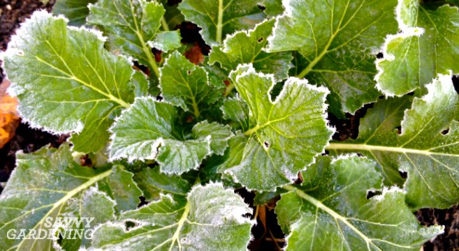vegetables that taste better after a frost