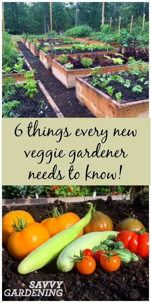 6 Things every new vegetable gardener needs to know! (Savvy Gardening)