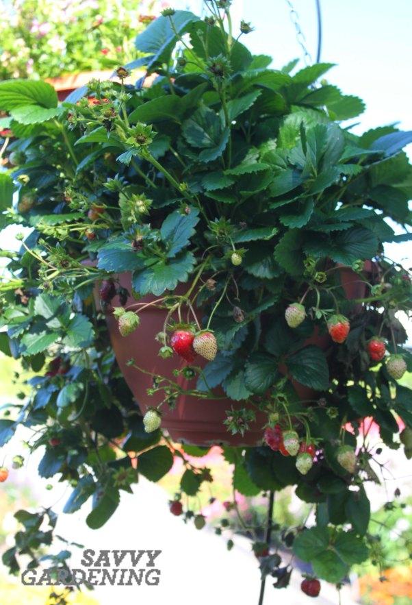 whatto plant in a pallet garden