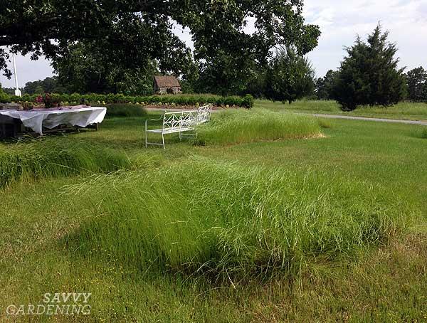 grass drifts