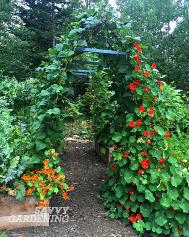 Vertical Vegetable Gardening Pole Bean Tunnels