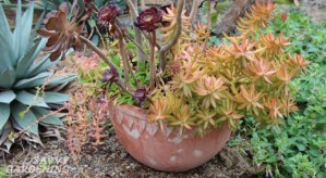 Succulents are another container gardening trend