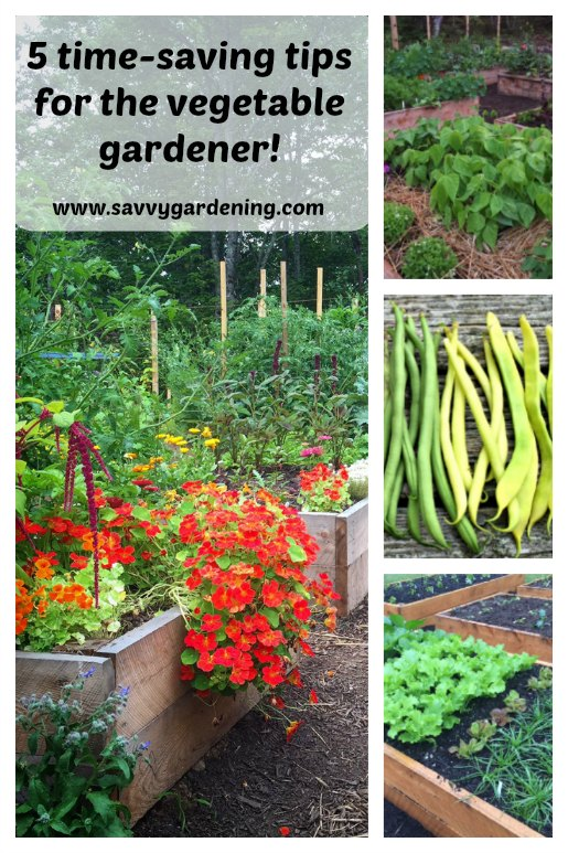 Time-saving gardening tips to help you get more out of your garden from SavvyGardening.com!