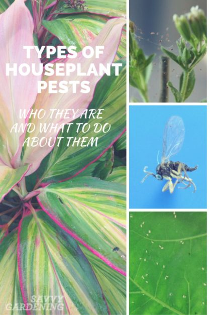 types_of_houseplant_-pests_pinterest