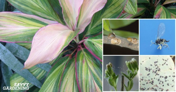 Types of houseplant bugs who they are and what to do about them mightylinksfo