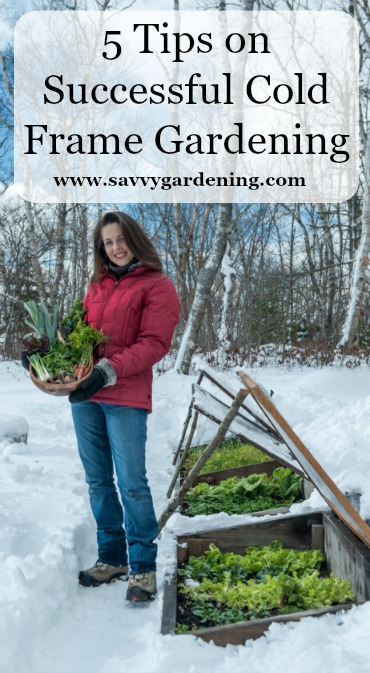 Turn your veggie garden into a year round food factory with cold frame gardening!