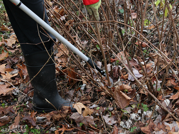 Lee Valley raspberry cane cutter
