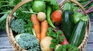 prevent garden pests