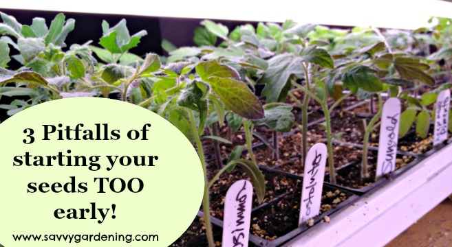 3 pitfalls of planting seeds too early