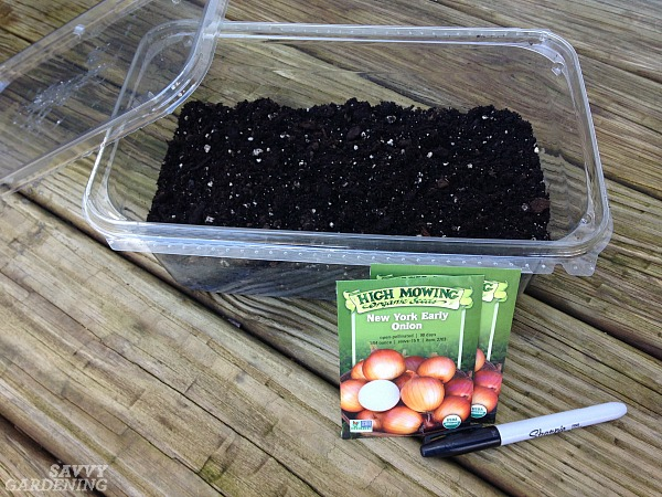 Starting onion seeds by winter sowing