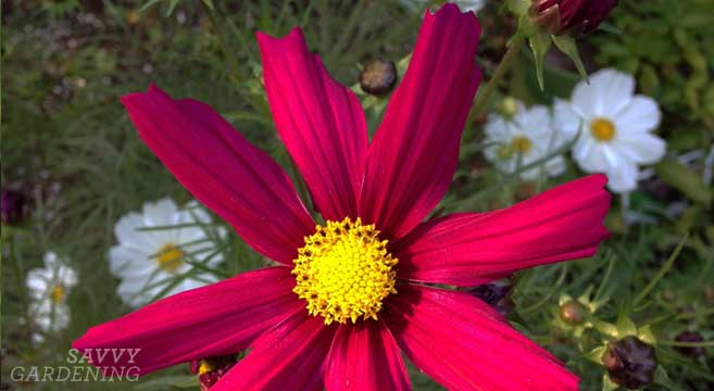 tips for planting and making raised flower beds