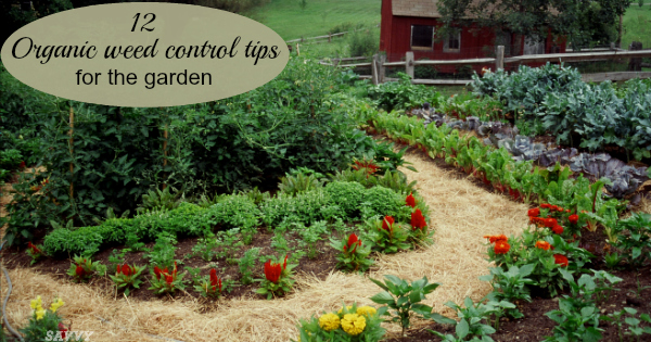 Organic Weed Control Tips For Gardeners, Weed Control For Gardens