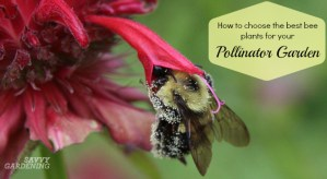 The best bee plants for pollinator gardens offer diversity.