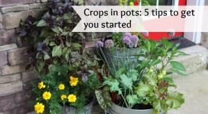 5 tips to boost success with vegetable container gardens