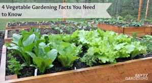 Four vegetable gardening facts you need to know.