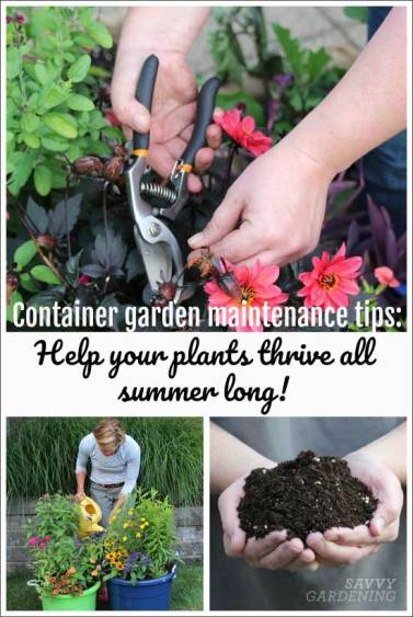 Container garden maintenance: From fertilizing and watering to deadheading, learn what you need to do to help your containers of edibles and ornamentals thrive all summer long. (AD)