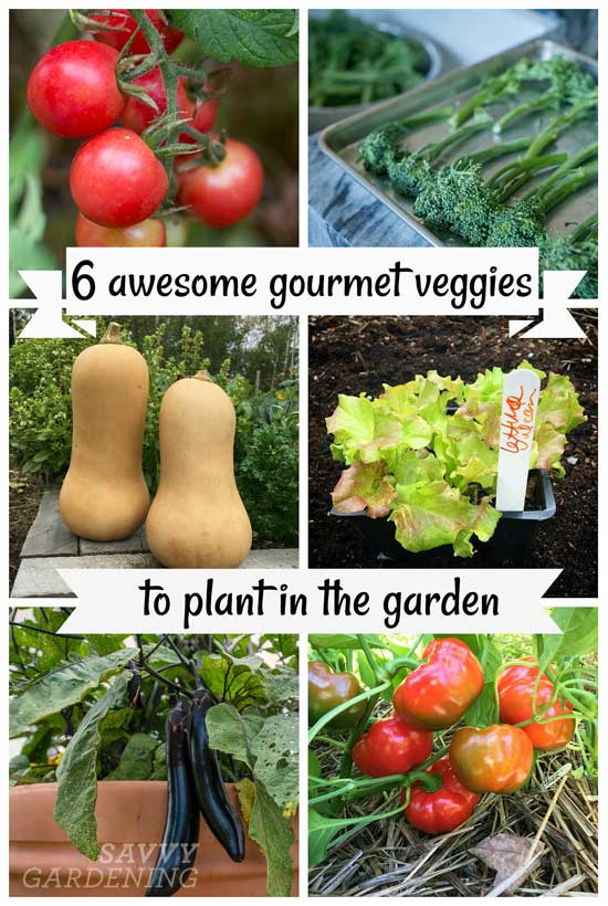 6 awesome gourmet veggies to plant in the garden—and what to do with your delicious harvest! (AD)