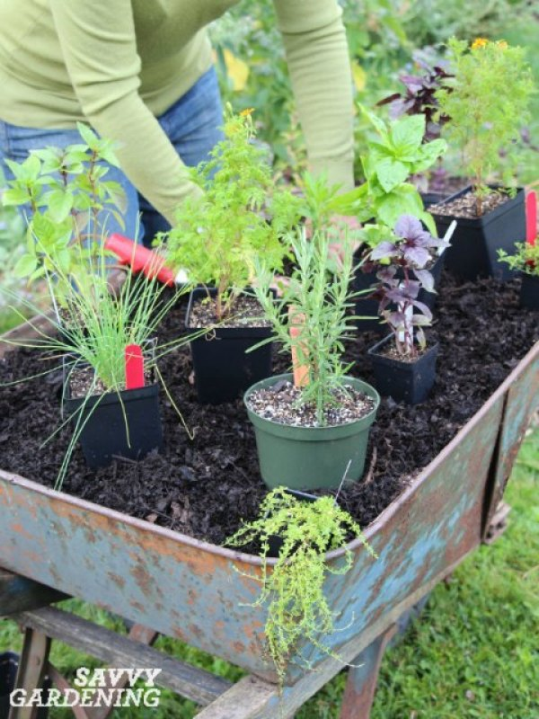 It's easy to grow culinary herbs in containers