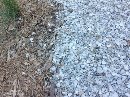 Garden mulches can come in many forms, including seashells.