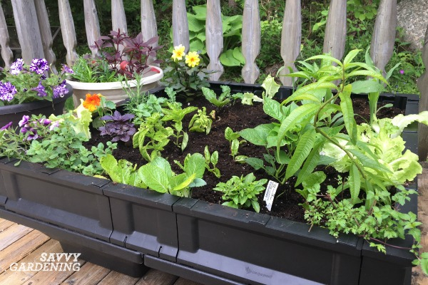 Planting in a container like a Vegepod allows you to grow more food in less space!