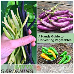 Learn how and when to harvest your homegrown vegetables.