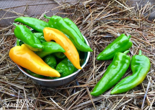 Get tips on when and how to harvest homegrown vegetables.